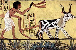 Burial chamber of Sennedjem, Scene: Plowing farmer. Circa 1200 BCE.