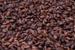 Cacao beans. Image courtesy of Imagicity.com.