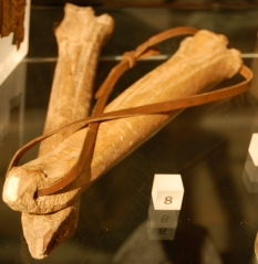 Medieval bone skates on display at the Museum of London.