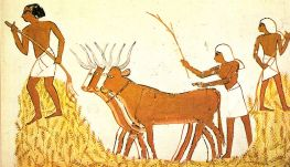 Ancient Egypt grain harvesting.