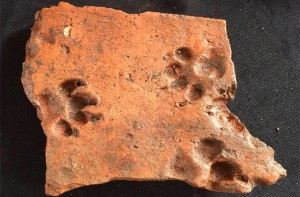 Puppy paw print in a Roman tile. Credit: Adam Slater, Wardell Armstrong Archaeology