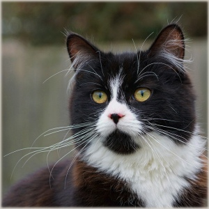 war of the worlds cat